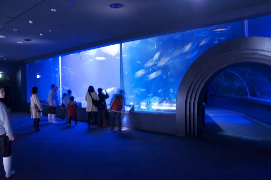 マリンピア日本海ナイトツアー