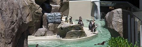 ペンギン海岸