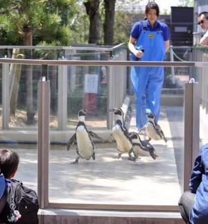 ペンギン解説20150508