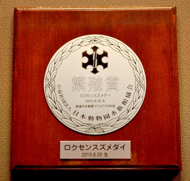 ロクセンスズメダイの繁殖賞を受賞しました | 新潟市水族館 マリンピア ...