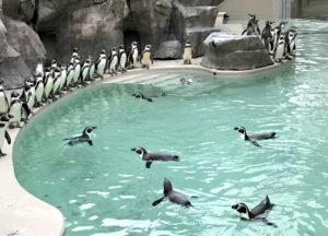 ペンギン海岸の様子 ヒナ(幼鳥)、見つけられるかな?