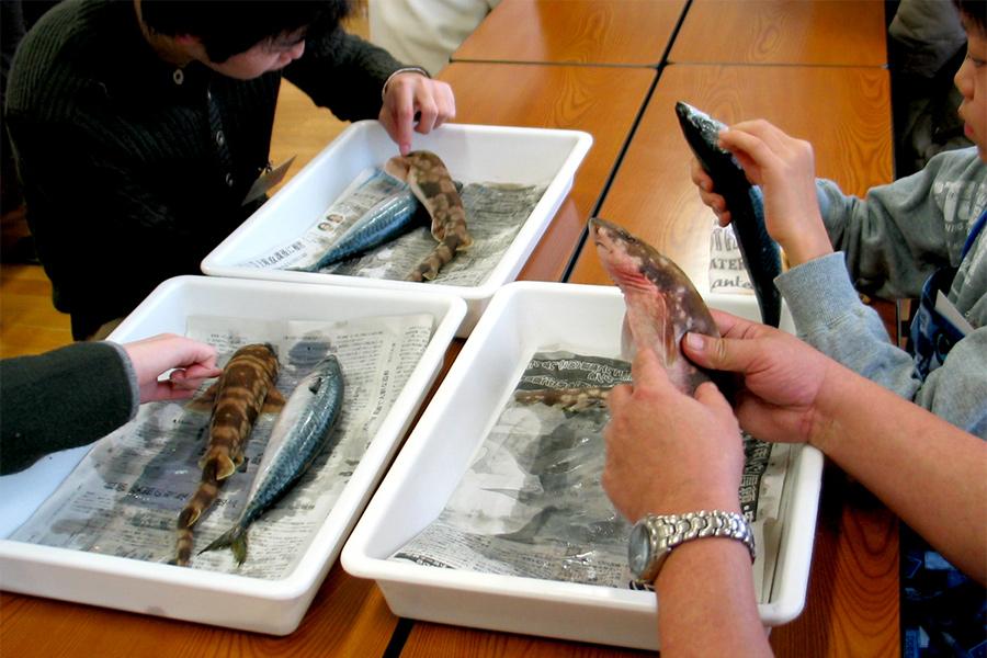いきもの教室 11月「カエルの解剖」参加者募集中