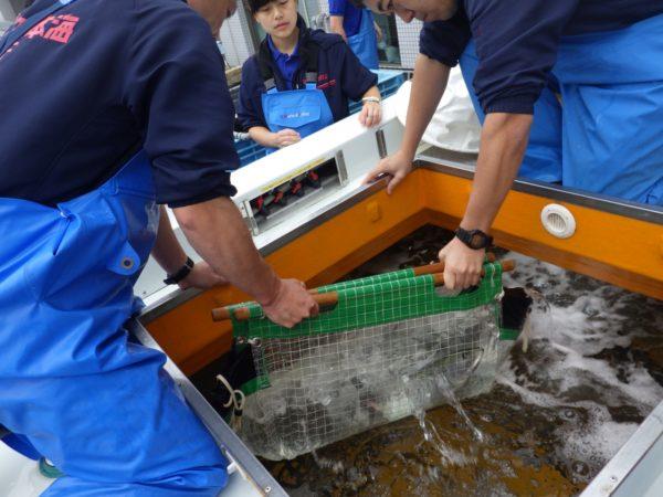 活魚輸送車から取り出す様子