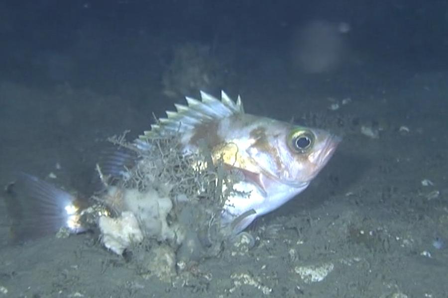 特別講演会「日本海北部における海洋環境と生物資源調査」