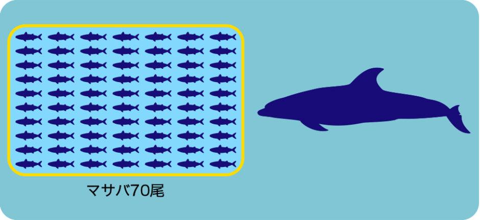 ハンドウイルカが一日に食べる餌の量