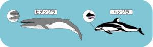 イルカとクジラ(口内)