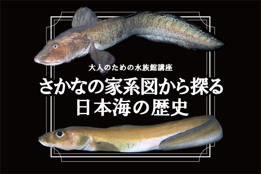 大人のための水族館講座:講演会「さかなの家系図から探る日本海の歴史」3/24(日)