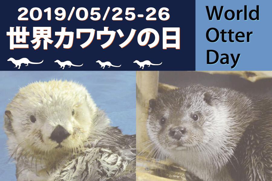 「世界カワウソの日」5月25日(土)26日(日)イベント開催!