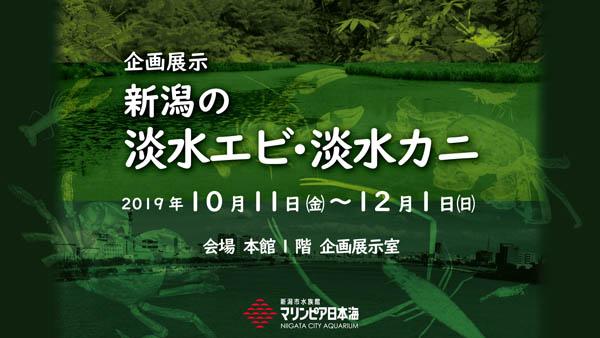企画展示_新潟の淡水エビ・淡水カニ