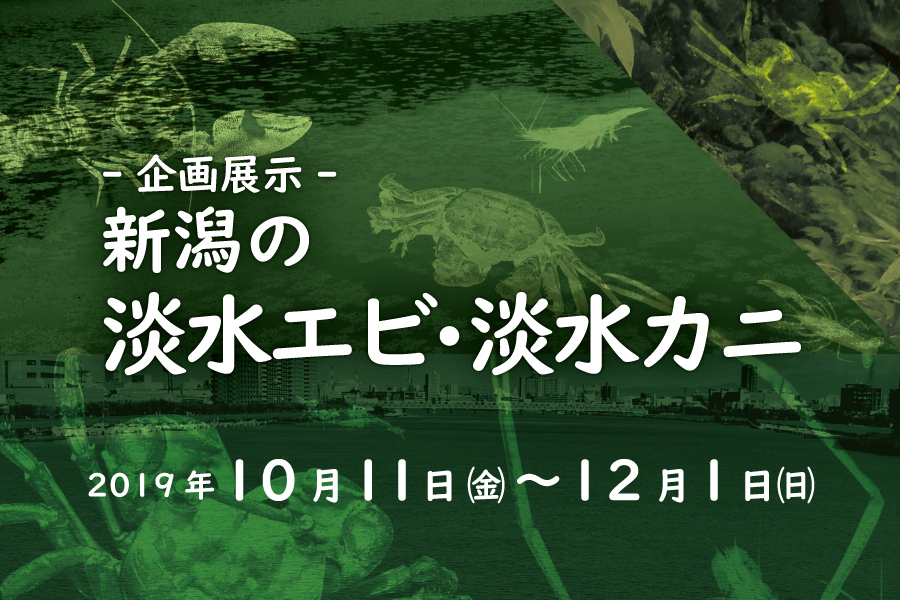企画展示「新潟の淡水エビ・淡水カニ」10/11~12/1