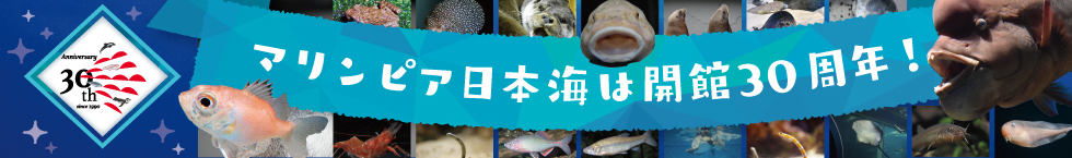 マリンピア日本海は開館30周年!