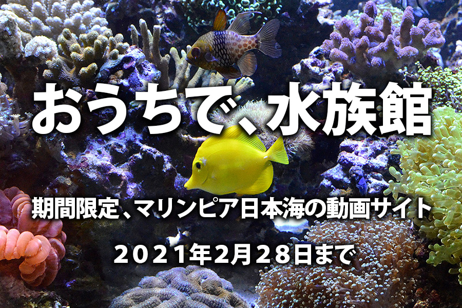 期間限定動画サイト「おうちで、水族館」