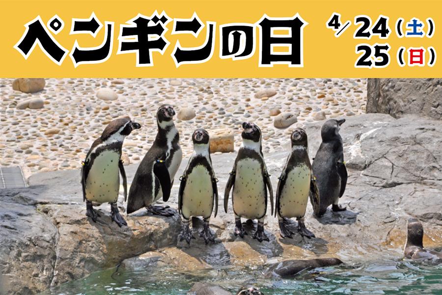ペンギンの日 4/24(土)、25(日)
