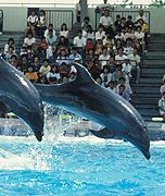 イルカのショータイムの写真
